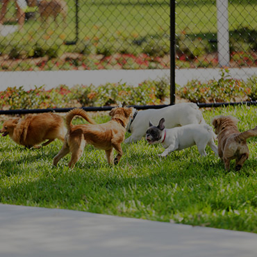 Large Dog Park at Elmwood Apartments